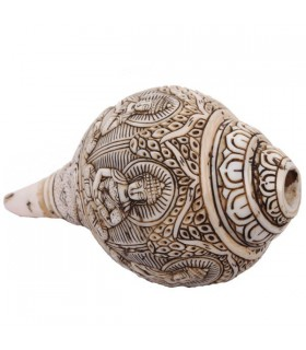Conch Shell Trumpet, A Different Shape